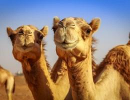 EGIPTO & PLAYA feriado carnaval 2021
